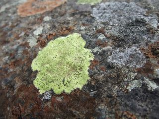 Lichen_On_Bridge