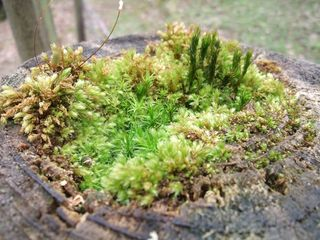 Mini_Forest_On_Post