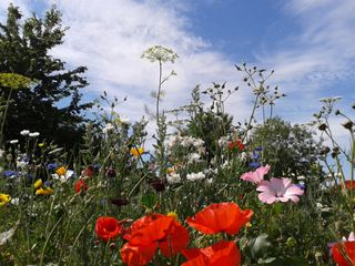 Christchurch_Meadow