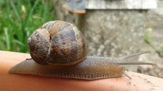 Speedy_The_Snail