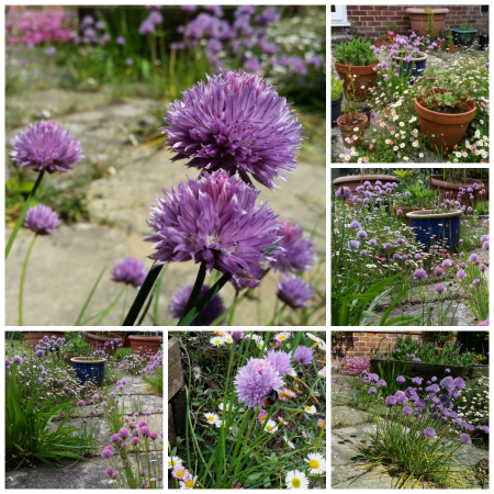Bees_Chives_Daisies_Collage