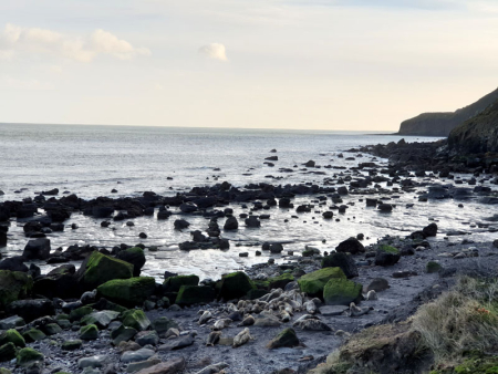 Seals_At_Ravenscar